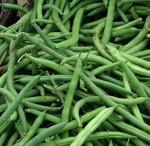 Old Homestead (A.K.A.) Kentucky Wonder Pole Bean Seeds QTY. 25