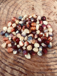 Rainbow Indian Corn Seeds QTY. 25