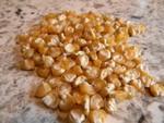 Golden Bantam 8 Corn Seeds QTY. 25