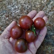 Growing Black Heirloom Tomatoes