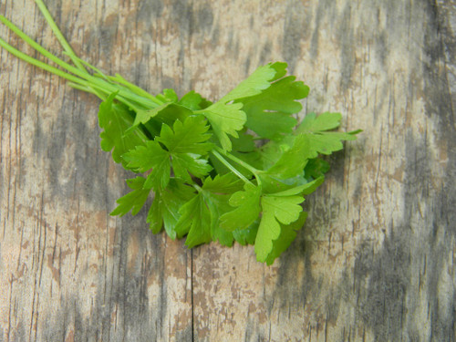 Parsley South GA Seed Co