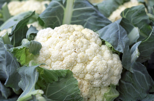 Snowball Cauliflower Seeds Qty. 100
