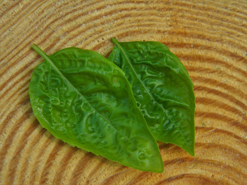 Herb Basil Sweet Italian Large Leaf Seeds QTY. 50