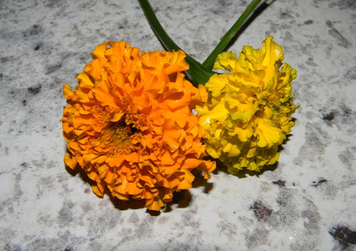 Marigolds by South GA Seed Co.