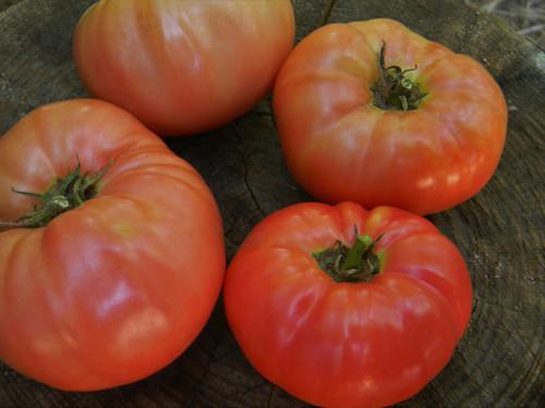 Granny Cantrell Tomato