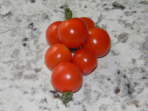 Mexican Midget Tomatoes