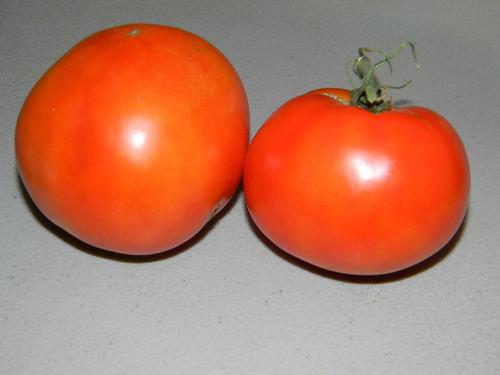 Harrow Tomato