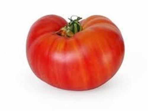 Red Beefsteak Tomato Seeds QTY. 25 (Indeterminate)