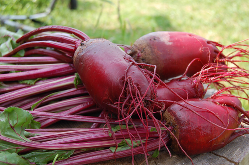 Cylindrical Beet Seeds QTY. 100