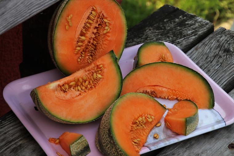 Hales Best Cantaloupe Seeds Qty 30 Heirloom Vegetable Seeds South Ga Seed Co These melon varieties have been developed for sweetness, and you will likely get more melons than you can eat! hales best cantaloupe seeds qty 30