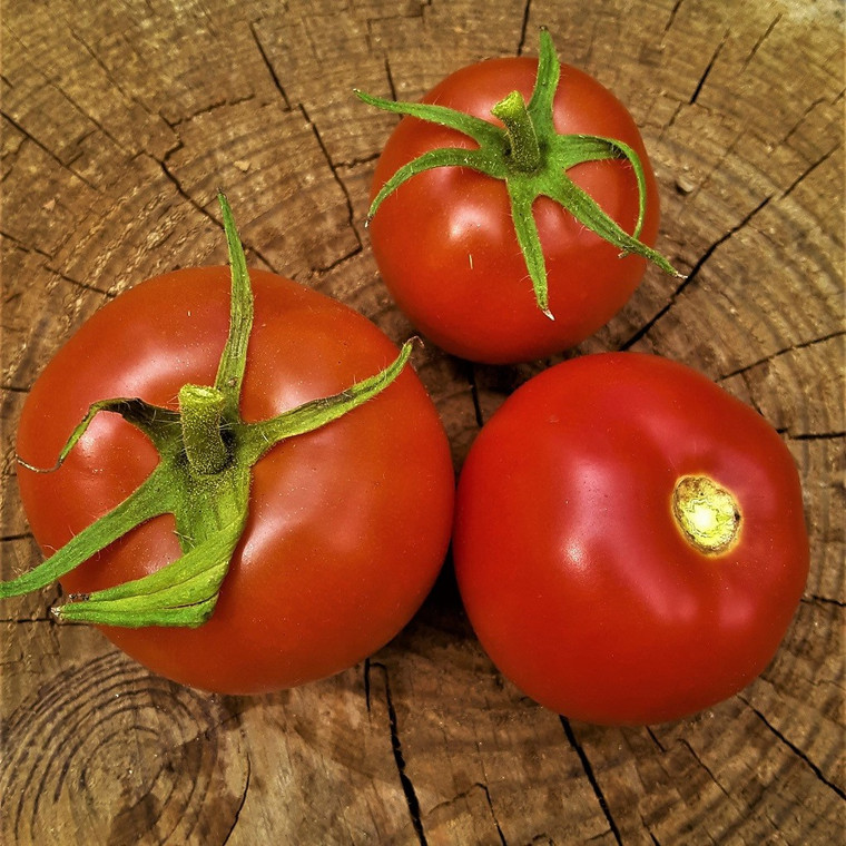 Arkansas Traveler Tomato Seeds QTY. 25 (Indeterminate)