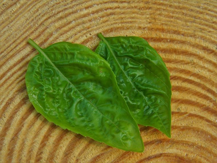 Herb Basil Sweet Italian Large Leaf Seeds QTY. 50