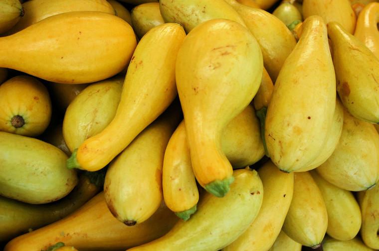Golden Summer Crookneck Squash Seeds QTY. 50