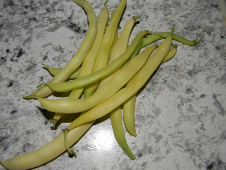Cherokee Wax Beans Photo by South GA Seed Co.