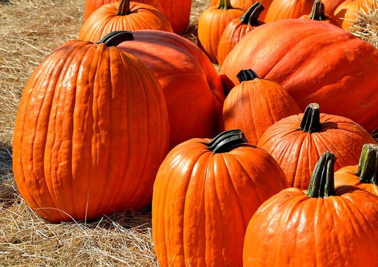 Howden's Field Pumpkin Seeds QTY. 20