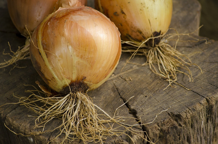 Texas Grano 1015Y Onions Seeds QTY. 150 (Short Day)
