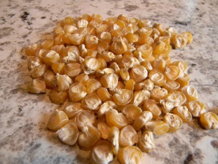 Golden Bantam Corn Seeds QTY. 50