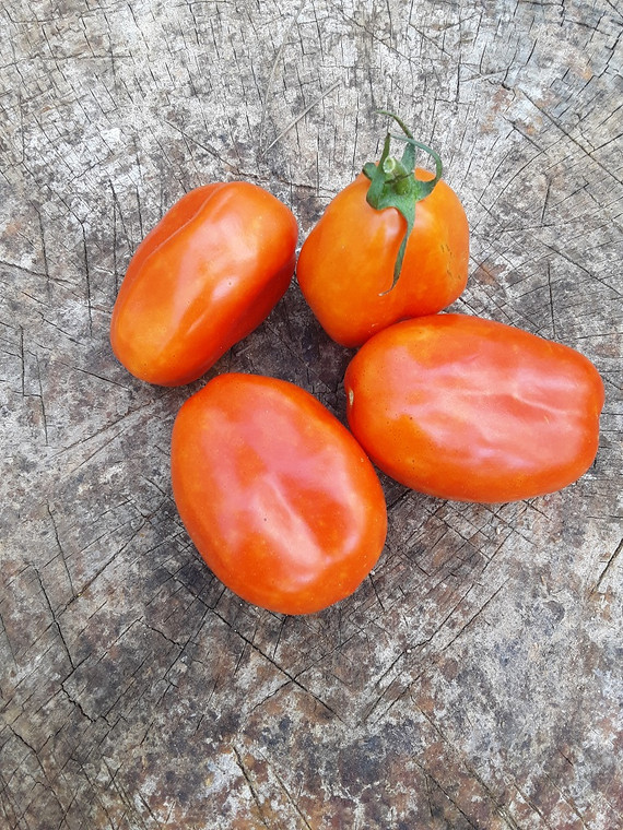 San Marzano Tomato Seeds QTY. 25 (Indeterminate)