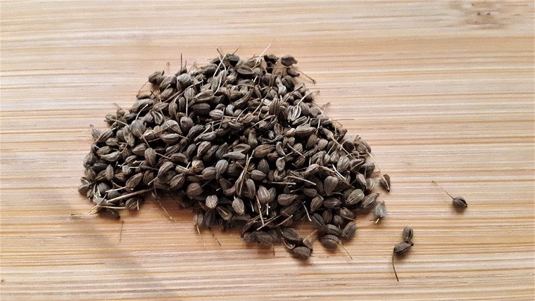 Herb Anise Seeds QTY. 75