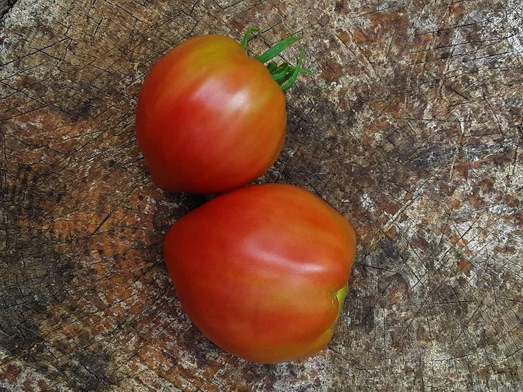 Anna Russian Tomato Seeds QTY. 25 (Indeterminate)