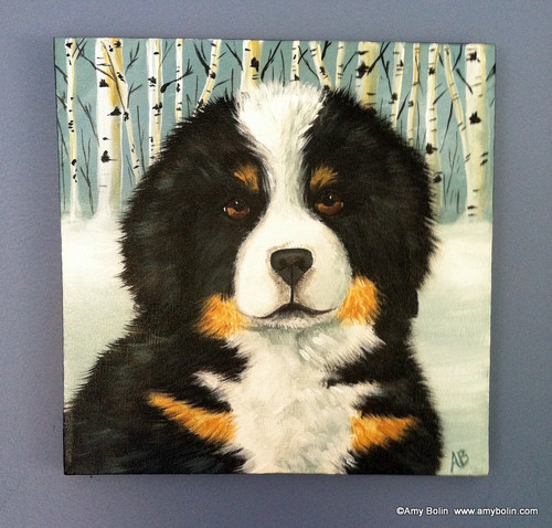 """Puppy Eyes"" Bernese Mountain Dog Original ART Acrylic Painting on Canvas 12"" square"