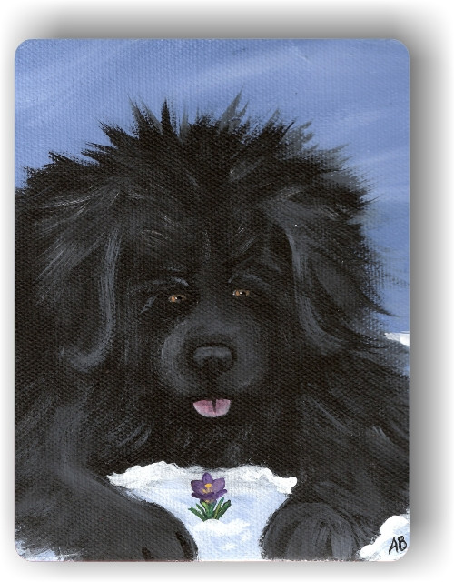 """Spring Is In The Air"" Black Newfoundland Magnet"