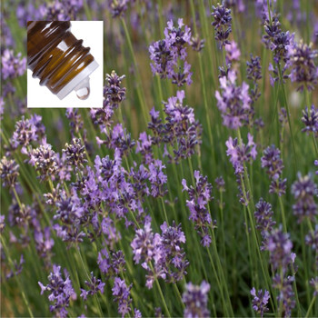 Lavender French Officinalis Pure Essential Oil