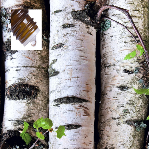Birch Sweet USA Pure Essential Oil