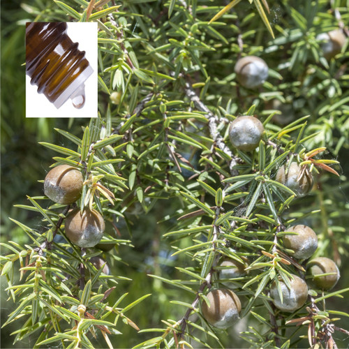 Cadewood Pure Essential Oil