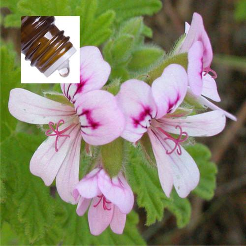 Geranium Ecosert Organic Pure Essential Oil
