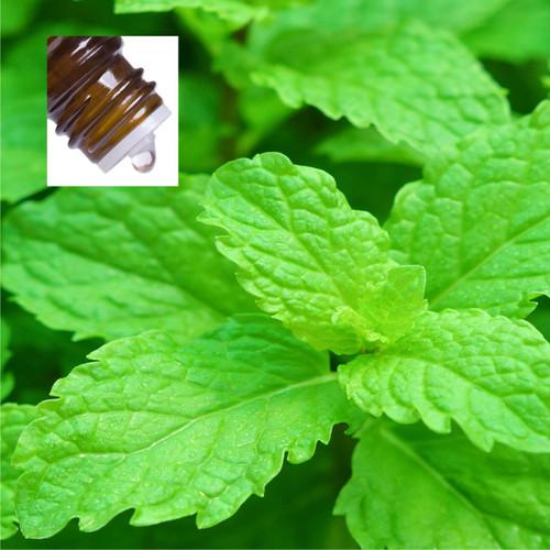 Peppermint Supreme Organic Pure Essential Oil