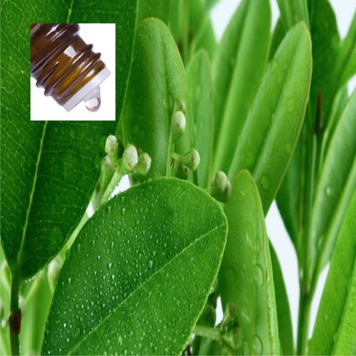 Ravensara Aromantica Wild Pure Essential Oil