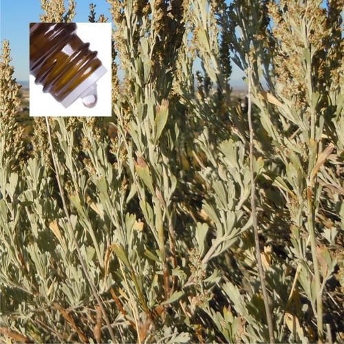Sage Desert Wildcrafted Pure Essential Oil