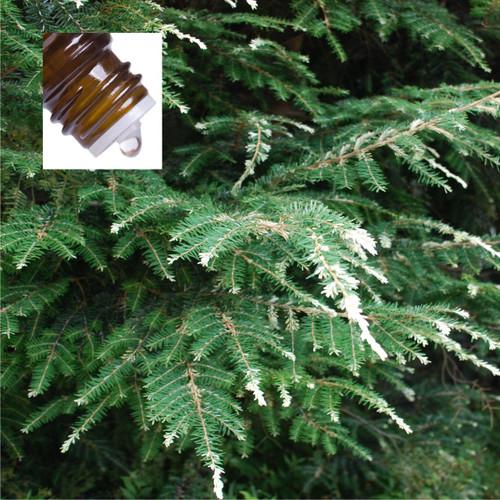 Spruce Hemlock Canada Pure Essential Oil
