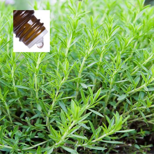 Tarragon Pure Essential Oil