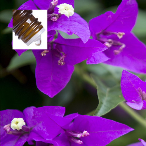 Violet Leaf Absolute Pure Essential Oil