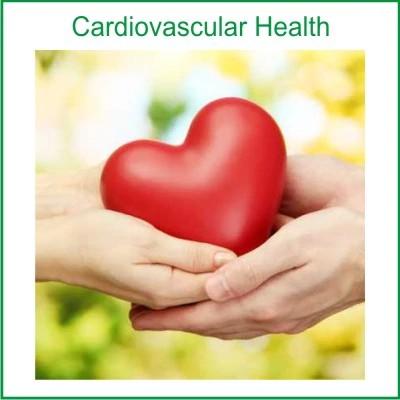heart-supplements-sub-cat-image-heart.jpg