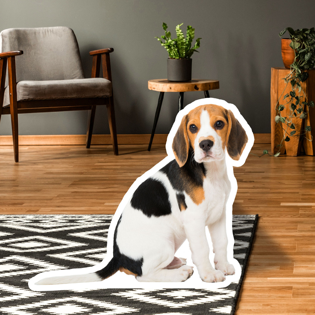 Beagle Standups
