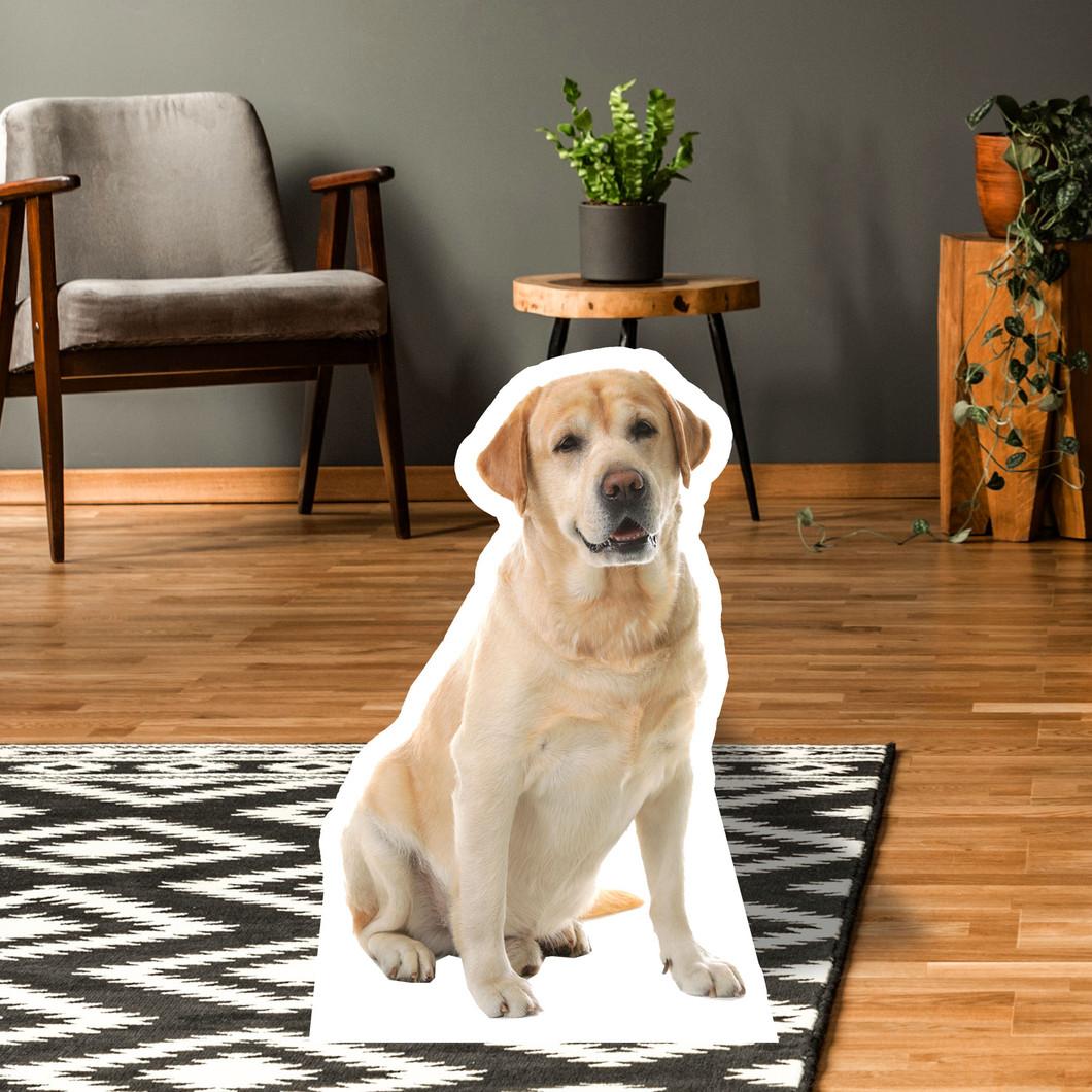 Labrador Retriever Standup