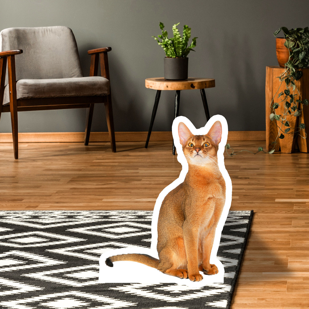 Abyssinian Standup