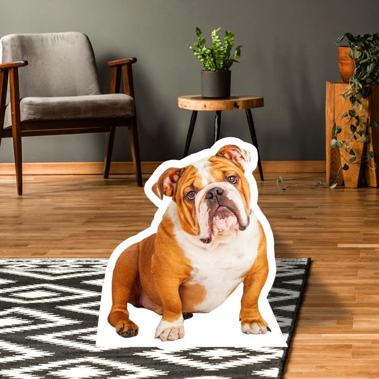 Bulldog Standup