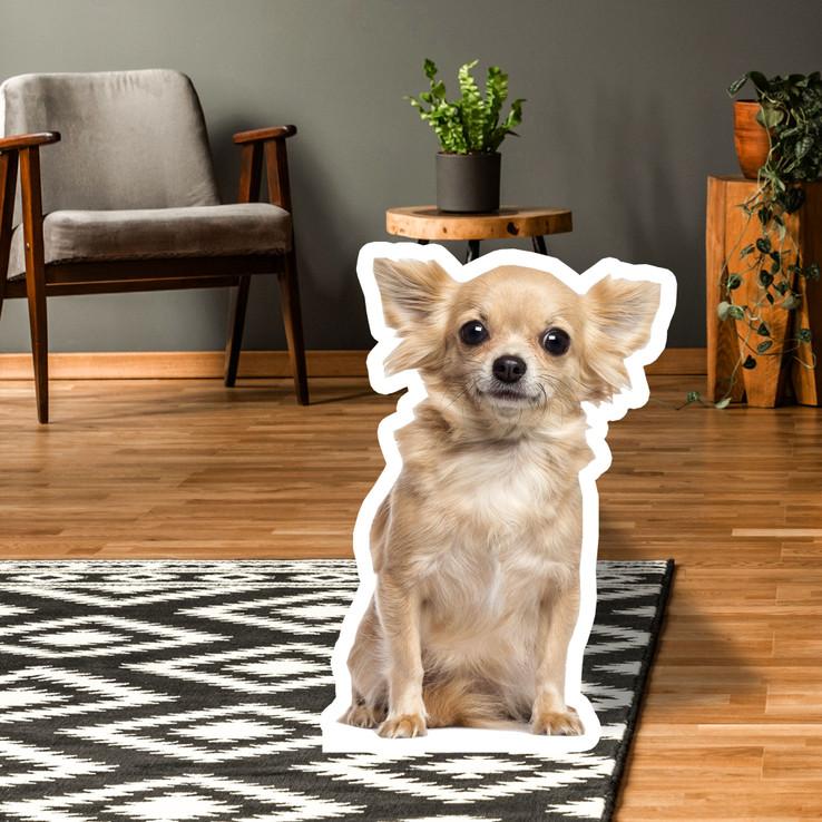 Chihuahua Standup