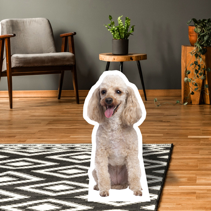 Poodle Standup