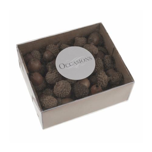 Small Natural Acorns Box of 50