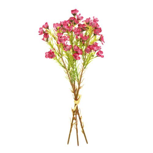 Waxflower Chamelaucium Bundle Burgundy