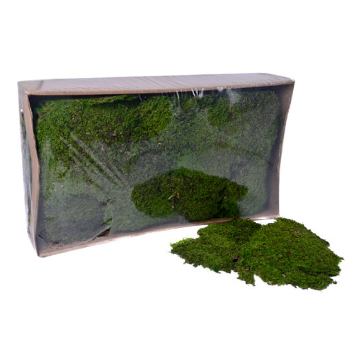 1kg Box of Preserved Green Indian Moss