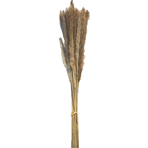 Dried Natural Pampas Grass 75cm/29 Inches