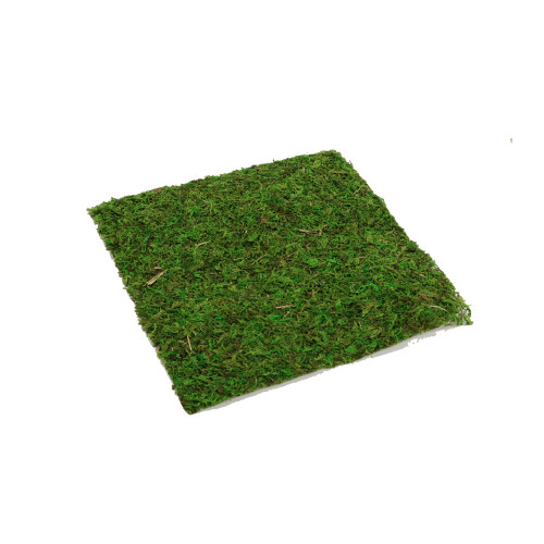 Dried Asia Moss Sheets 28 x 28cm