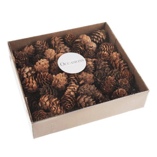 Box of 100 x Small Natural Pine Cones