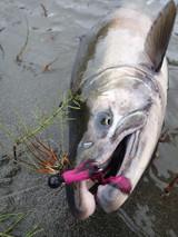 Fishing Report 10-16